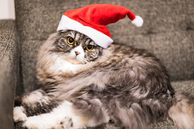 christmasA7_03359_TP_V.jpg